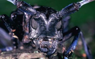 Pests that live in firewood